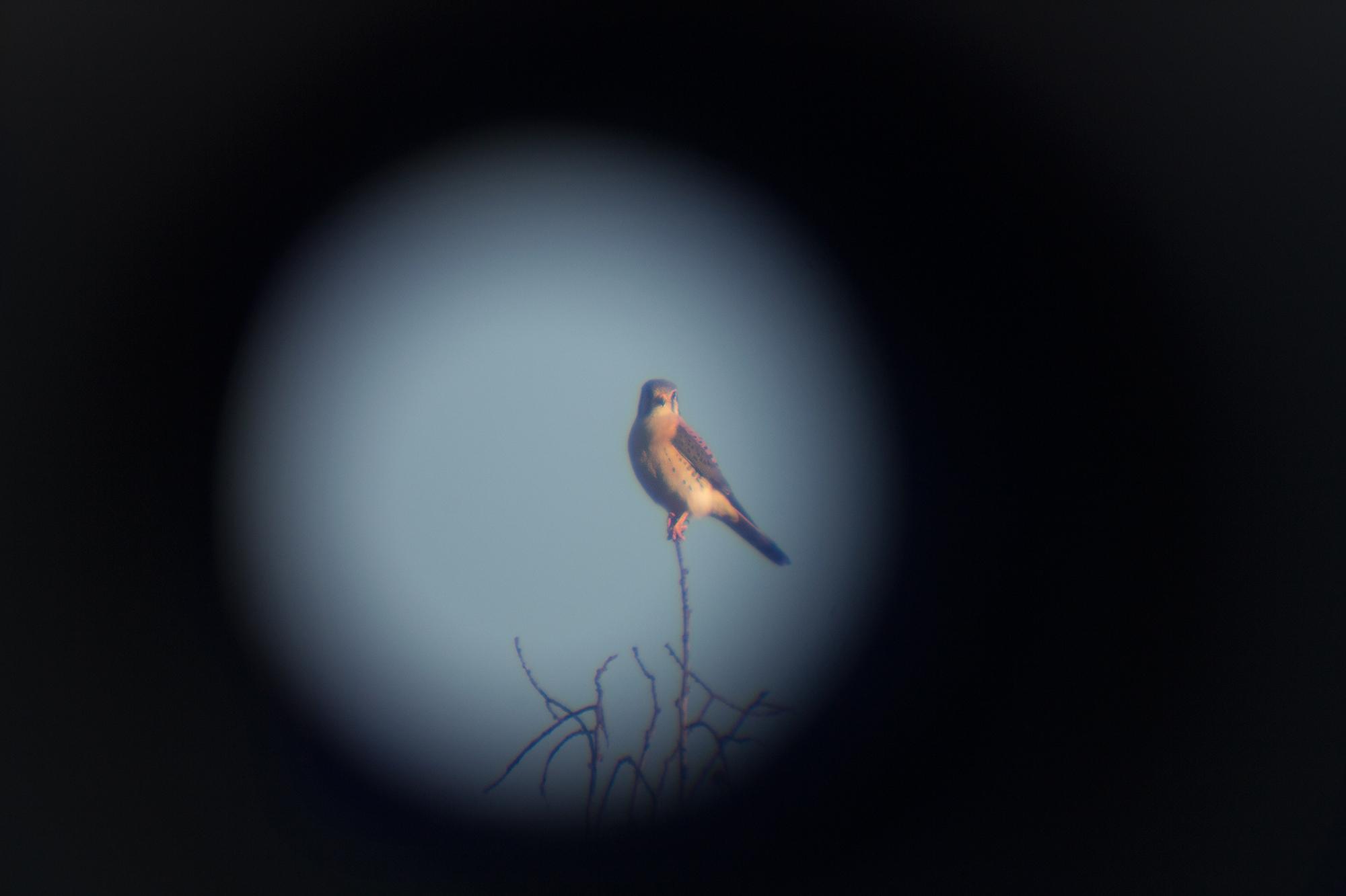 telescopebird